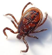 Tick Control Wakefield, Melrose, Saugus, Lynnfield