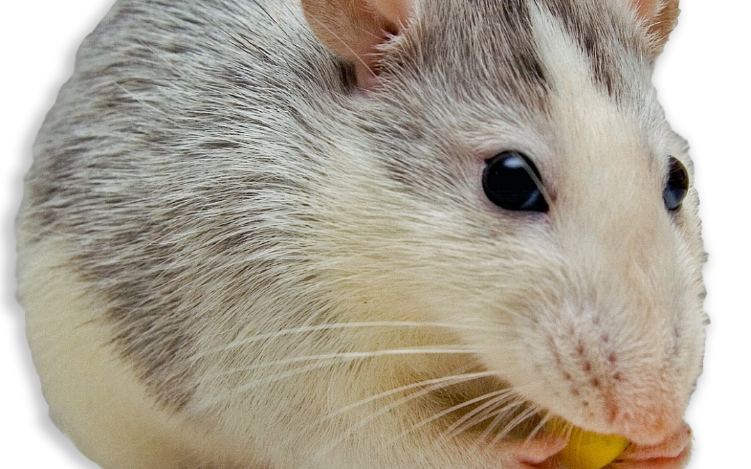 5 Signs You May Have Mice in Your Home