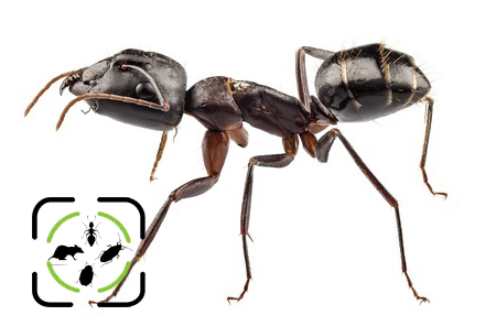 Tips To Combat Ants This Year   Middlesex Pest Control